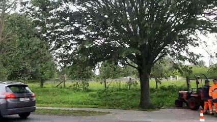 Des tilleuls arrachés à Bayeux, lundi 11 mai 2020