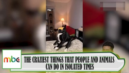 THE CRAZIEST THINGS THAT PEOPLE AND ANIMALS CAN DO IN ISOLATED TIMES.