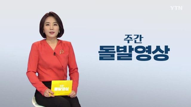 [주간 돌발영상] 2020년 5월 셋째 주 / YTN