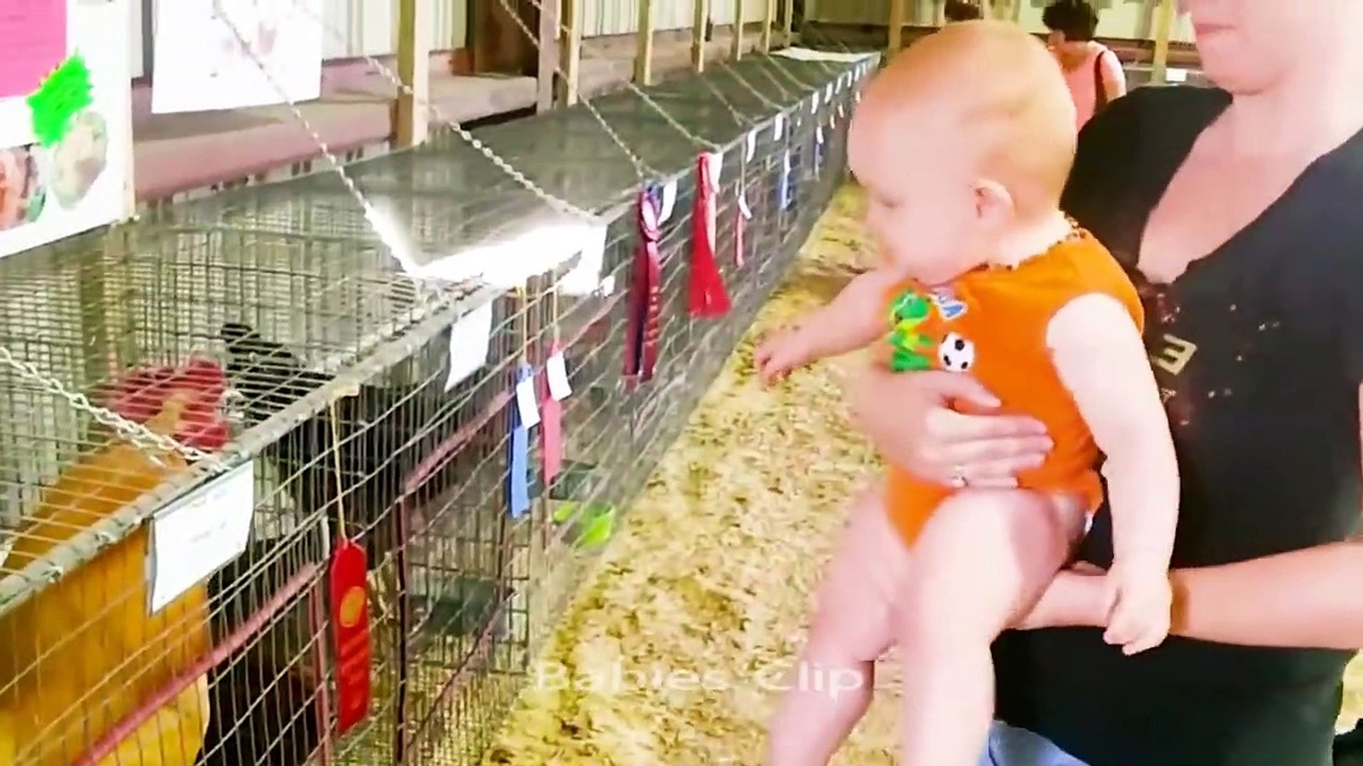Cute Baby and Pets Videos - Cute Birds and  Babies videos