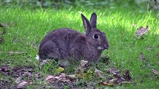 Lethal Virus That Targets Rabbits Spreading In US