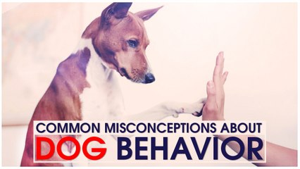 Common Misconceptions About Dog Behavior