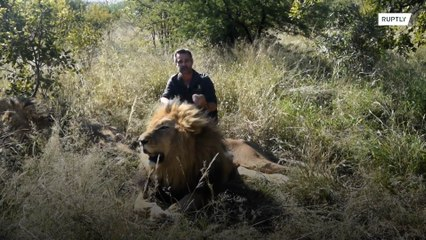 The 'Tiger King' may be in prison, but the 'Lion Whisperer' is also in trouble
