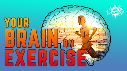 What Does Exercise Do To Your Brain?