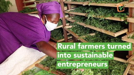 Burkina Faso: Rural farmers turned into sustainable entrepreneurs