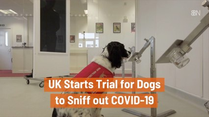 Dogs Could Potentially Smell Covid-19