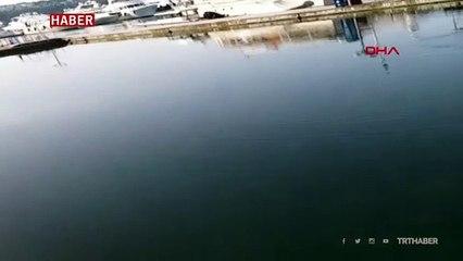 Sarıyer'de binlerce balık kıyıya geldi