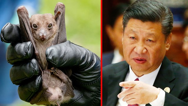 Wuhan bans consumption of wild animals