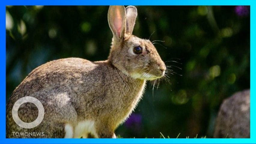 兔兔危機!美國兔群爆發致命病毒疫情