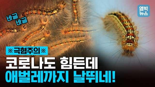 [엠빅뉴스] 엄청나게 먹어치우는 애벌레들이 온 산을 뒤덮었다. 이 벌레들 뭐야?