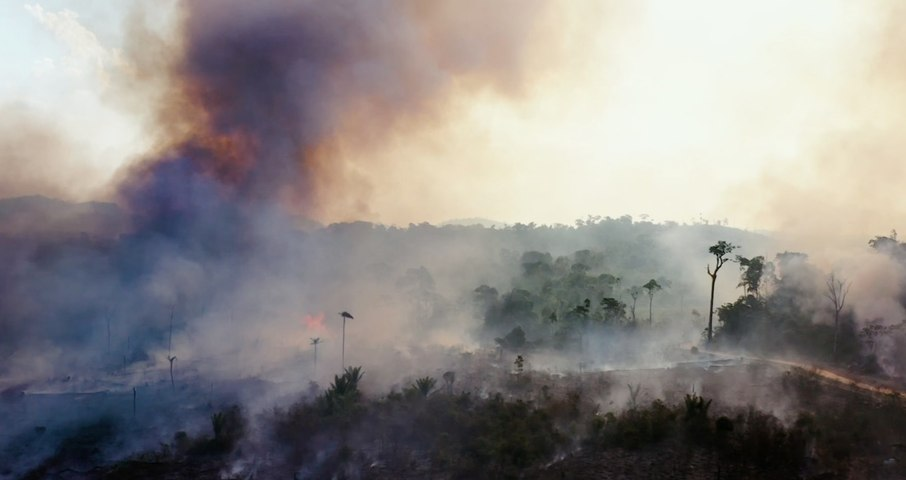 The Amazon Is Still Burning. Blame Beef (and Bolsonaro)