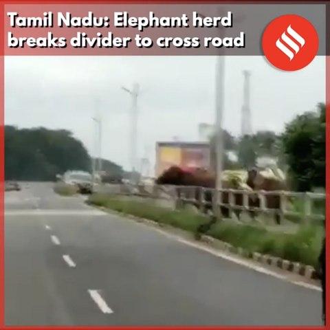 Tamil Nadu: Elephant herd  breaks divider to cross road