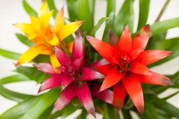 Vos Questions Jardin: Comment conserver un guzmania