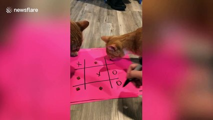 Family play tic-tac-toe with their cats using biscuits during lockdown