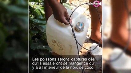 Il fabrique un incroyable piège à poisson à partir de noix de coco