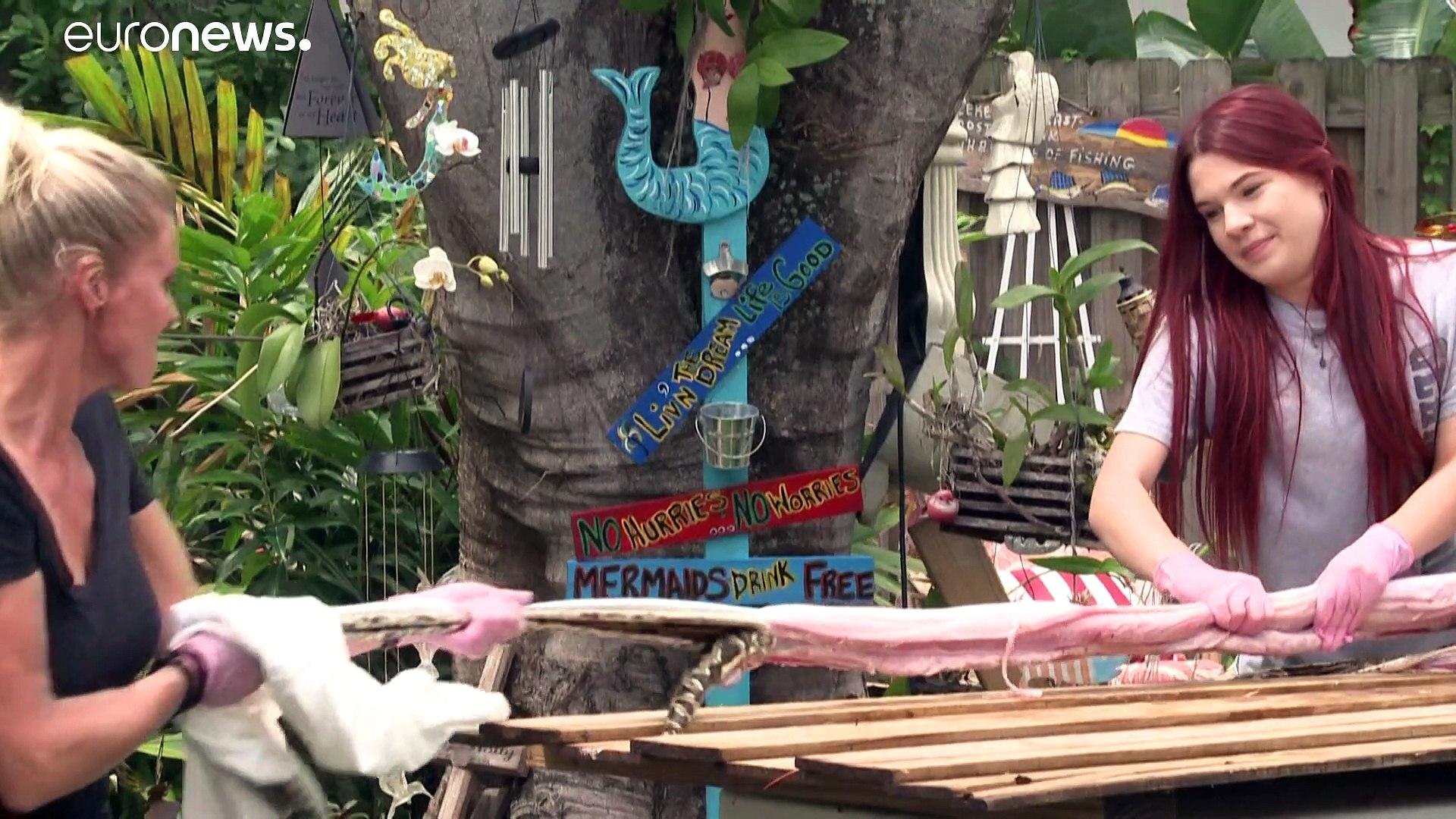 شاهد: يصطادون الأفاعي والثعابين السامة في فلوريدا لصنع أقنعة واقية من كورونا