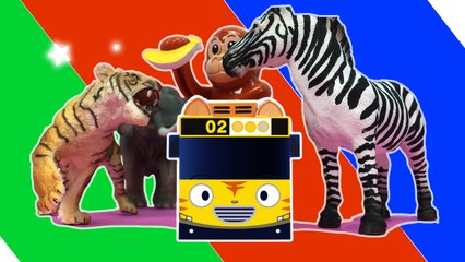 A Safari Adventure l Tayo's Sing Along Show l Tayo the Little Bus