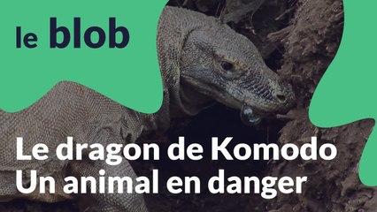 Le dragon du Komodo | Animaux en danger
