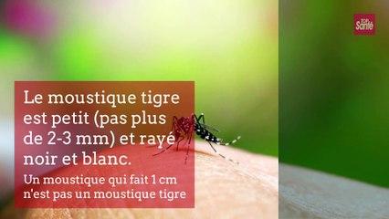Comment reconnaître les moustiques tigre ?