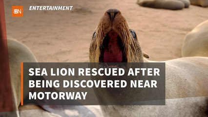 This Sea Lion Is Saved