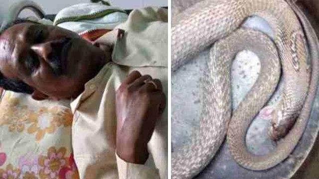 वर्दी पहनने के दौरान ASI को कोबरा ने काटा, फिर छटपटा कर कुछ देर बाद सांप ने तोड़ा दम