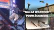"""Il construit un parcours digne de """"Ninja Warrior"""" pour les écureuils"""