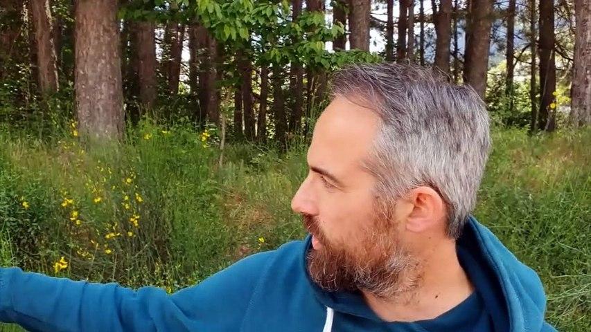 Αντιδράσεις για την κοπή δέντρων στο Αθλητικό Κέντρο Καρπενησίου  - Τι απαντά ο Δήμος για τις συγκεκριμένες παρεμβάσεις