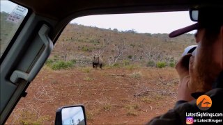 Ce photographe animalier se retrouve face à un rhinocéros en colère