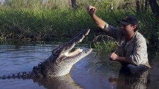 Il s'amuse avec un énorme crocodile... Courageux