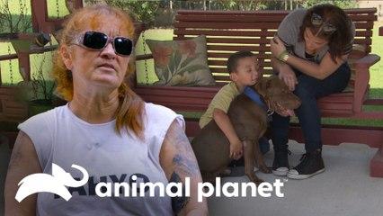 Cachorro sobrevivió a impacto de bala en su cabeza | Pit bulls y convictos | Animal Planet
