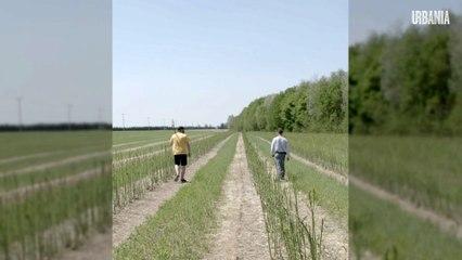 Crise de main d'oeuvre chez les agriculteurs | COVID-19