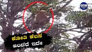 ಕೊರೊನ ಶಂಕಿತರ ರಕ್ತದ ಸ್ಯಾಂಪಲ್ ಕದ್ದೊಯ್ದ ಕೋತಿಗಳು | Oneindia Kannada