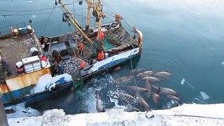 Regardez qui attend au pied du bateau de ces pêcheurs...