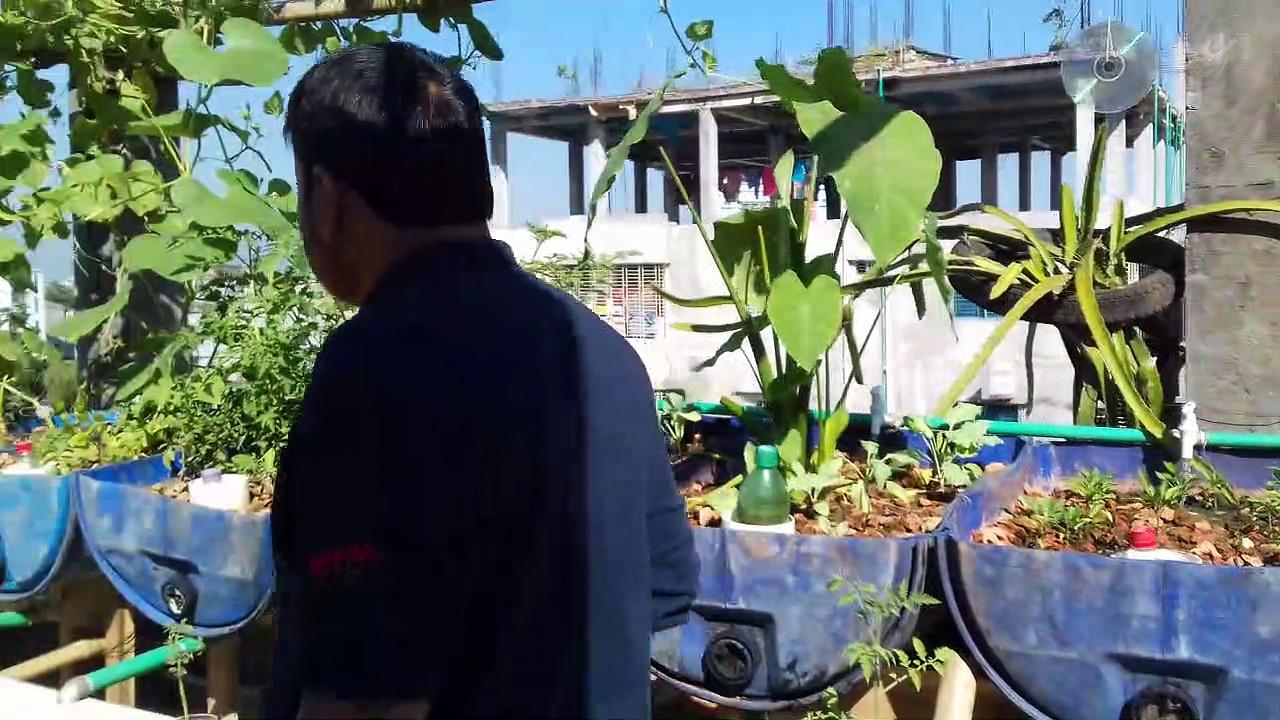 sadequel's Aquaponic garden 3rd video [20161119_100401]