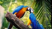 Are Parrots OP