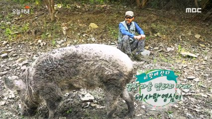 "[HOT] The father of the wild boar in the village of Burat, ""My love, Young-shim."", 생방송 오늘 저녁 20200602"