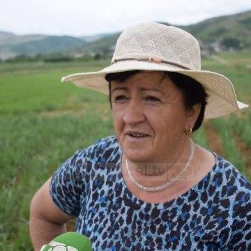 Më shumë fitim me bimë medicinale/ Fermerët e Korçës i largohen kulturave tradicionale