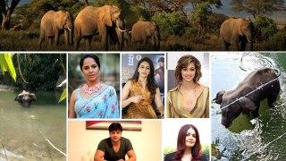#Elephant : Nation Reacts : దేశాన్ని కుదిపేస్తున్న ఏనుగు ఘటన, స్పందించిన యావత్ భారతం...!!