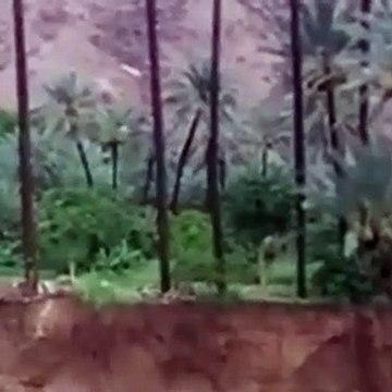 Son dakika... Yemen'de sel felaketi