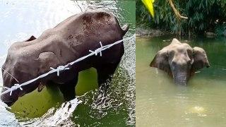 Keral Elephant : கேரள யானையை திட்டமிட்டு கொன்று உள்ளனர்... வெளியான தகவல்a