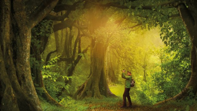 THE HIDDEN LIFE OF TREES documentary movie