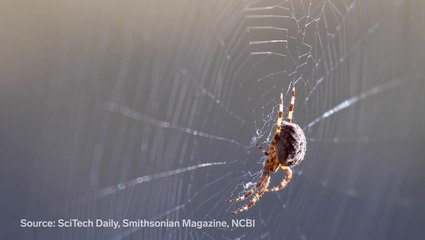 The special properties of spider silk and what science can learn from it