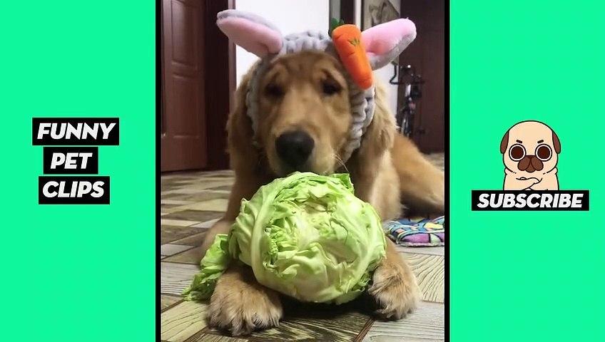 Tik Tok Pets- Funny Cute Animals #42