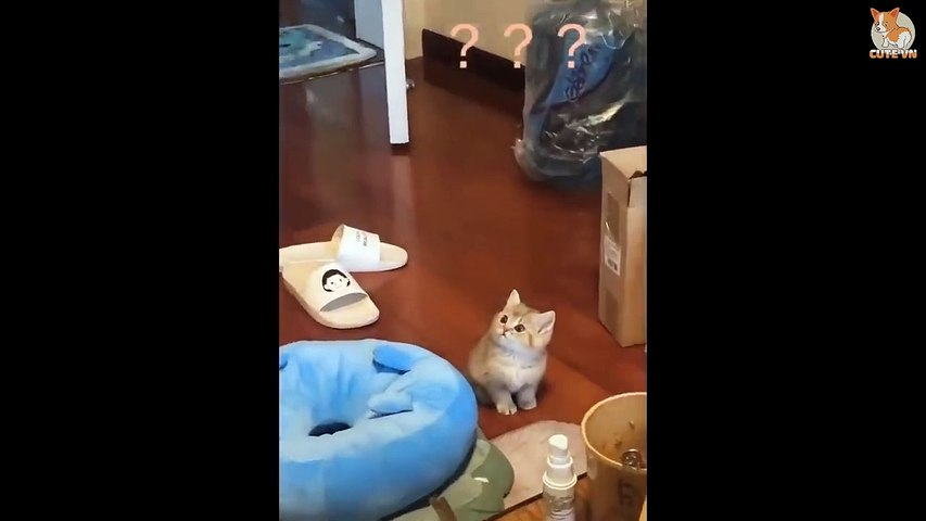 Cute is Not Enough - Cute Kittens In The World #14 - Cute Animals