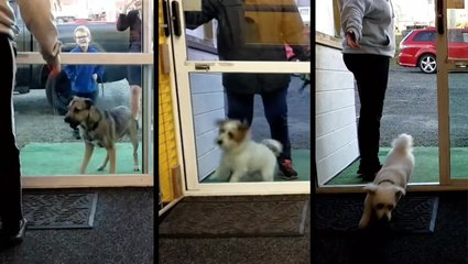 Excited Pups Return To Doggy Daycare