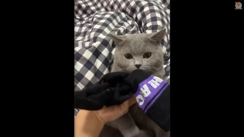 Aww -  Cats And  Dogs Reaction When They Smell Strange  - Cute Animal