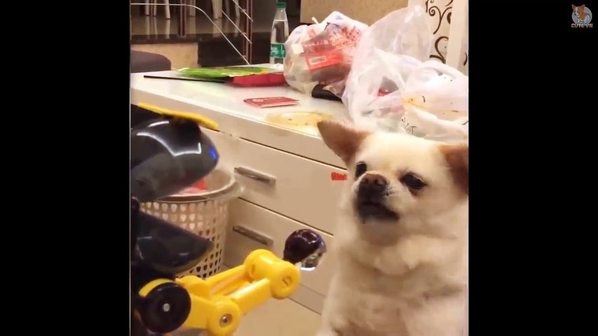 Dog & Cat Reaction to Playing Toy - Funny Dog & Cat Toy Reaction Compilation - Cute Animals