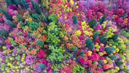 Une forêt en automne filmée aux Etats-Unis par un drone