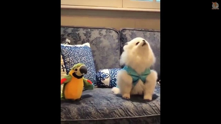 TRY NOT TO LAUGH  - Funny and Cute Animals Compilation 2019 #12 -  Cute Animals