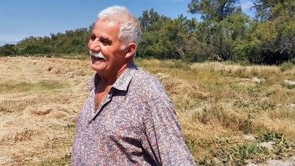 Vauvert : Jacques Blatière manadier aux Iscles explique la récolte du foin